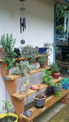 My herbs!