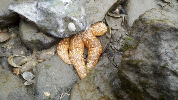 Starfish waiting for the tide.