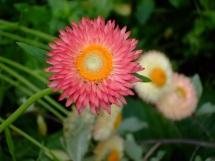 Floral close-up
