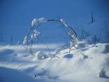 snow laden twig