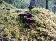 Wild mushrooms in Southeast Alaska