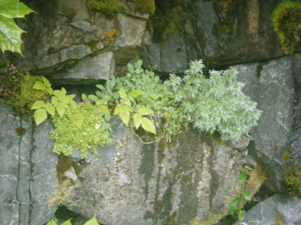 Plants growing on the rocks out by St. Theresa's Shrine