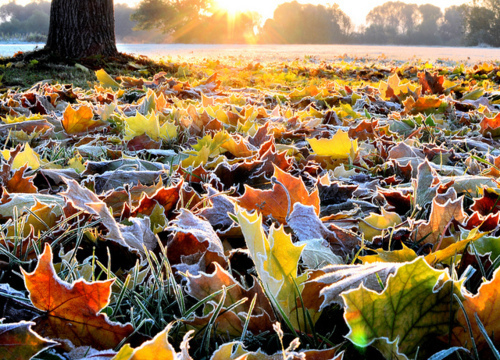 autumn-frost-ground-leaves-nature-Favim.com-437015